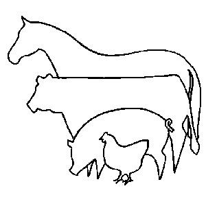 С/Х животные